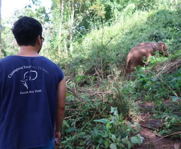 Mahout Training